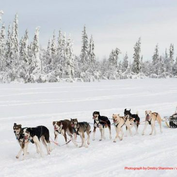 Mushers out of Storåbränna I