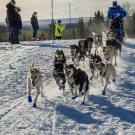 Winner of Amundsen Race 2017 12 dog team