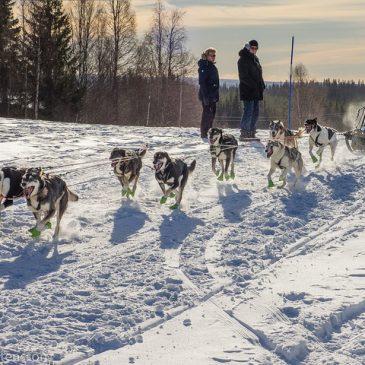 Winner of Amundsen Race 2017 8 dog team